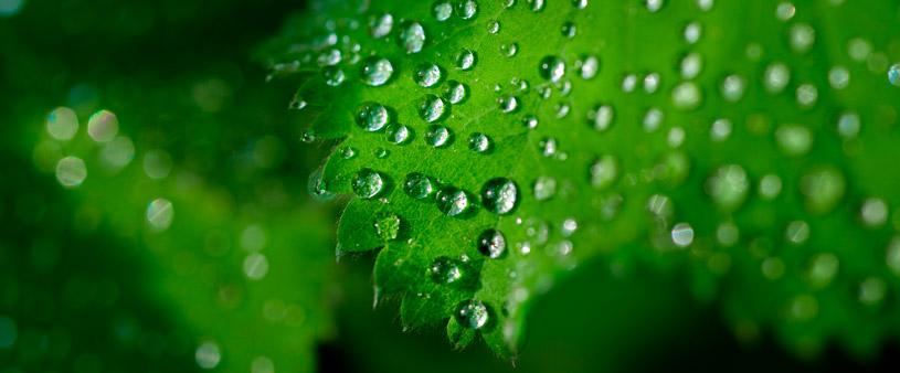 Les plantes poden extraure aigua de minerals com el guix
